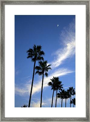 Palm Trees In The Sky Framed Print