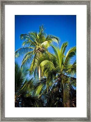 Palm Trees In The Sun Framed Print by Anthony Doudt