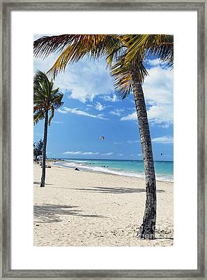 Palm Trees On Ocean Park Beach Framed Print by George Oze