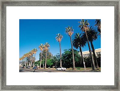 Palm Trees On Street , Los Angeles , California , Usa Framed Print by W. Buss