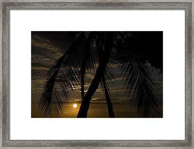 Palm Trees Silhouetted By The Setting Framed Print by Todd Gipstein