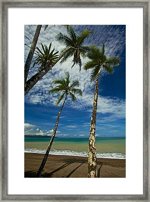 Palm Trees Framed Print by Simone Pastore