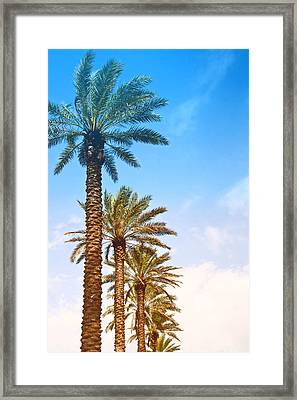 Framed Print featuring the photograph Palm Trees by Susi Stroud