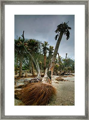 Palm Trees Walking Framed Print by Steven Ainsworth