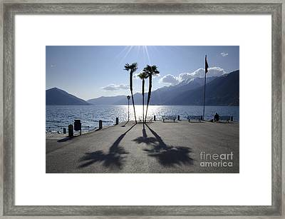 Palm Trees With Shadows Framed Print