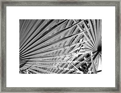 Palm Veils Framed Print