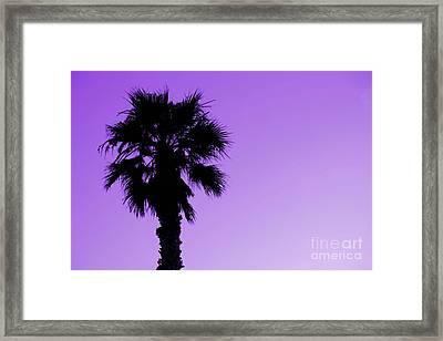 Palm With Violet Sky Framed Print by Kim Pascu
