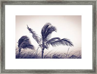 Palms 4 Framed Print