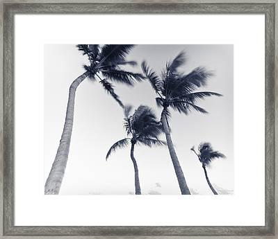 Palms 5 Framed Print