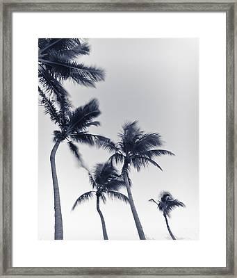 Palms 6 Framed Print