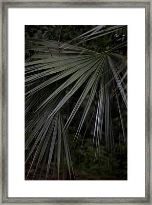 Palms Framed Print by Christina Durity