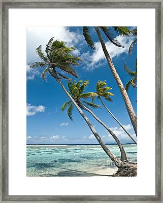 Palms In The Wind Framed Print by Jim Chamberlain