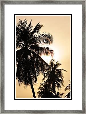 Palms Framed Print by Mark Britten