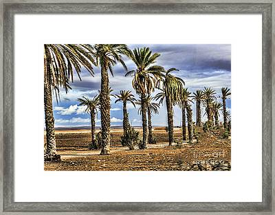 Palms Morocco I Framed Print by Chuck Kuhn