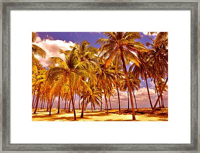 Palms On Half Moon Caye II  Framed Print by Valerie Rosen