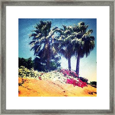 #palms #trees #beach #webstagram Framed Print by Andrea Bigiarini