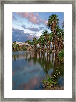Palms Trees Over Papago Lake Framed Print by Dave Dilli