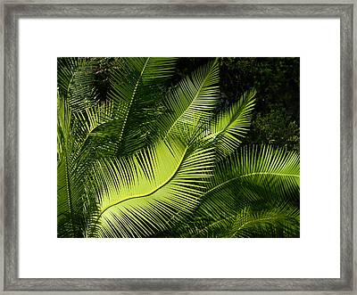 Framed Print featuring the photograph Palms Waving At The Sun by Jodi Terracina
