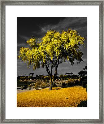 Palo Verde Framed Print by Jim Painter