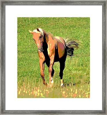 Palomino Framed Print by Dorrie Pelzer