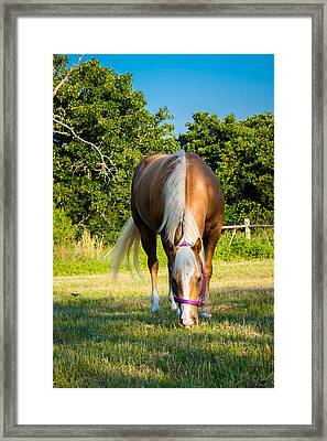 Palomino Framed Print by Doug Long