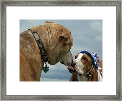 Framed Print featuring the photograph Pals by Judy  Johnson