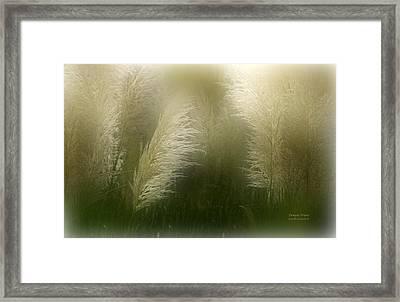 Pampas Dream Framed Print