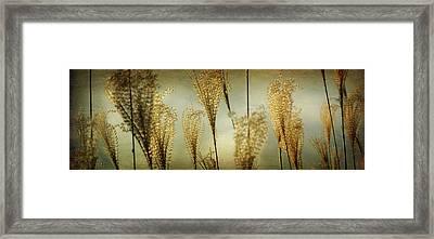Pampas Grass Panoramic Framed Print