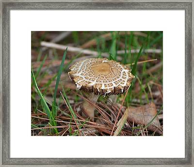 Framed Print featuring the photograph Pancakes by Mary Zeman