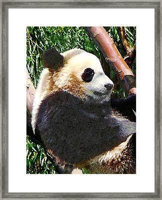 Panda In Tree Framed Print by Susan Savad