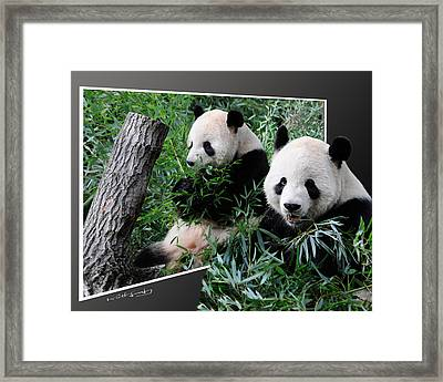 Panda Out Of Frame Framed Print
