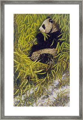 Panda Framed Print by Steven Wood