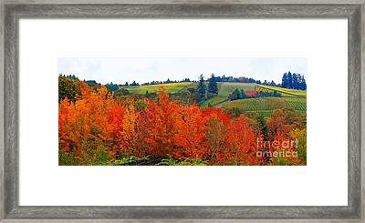 Panorama Of The Red Hills Of Dundee Oregon Framed Print by Margaret Hood