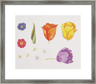 Pansies And Tulips Framed Print by Digital Vision.