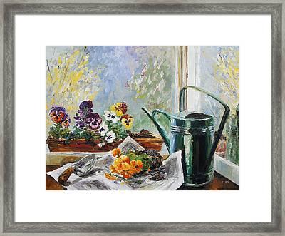 Pansies For My Window Box Framed Print by Barbara Pommerenke