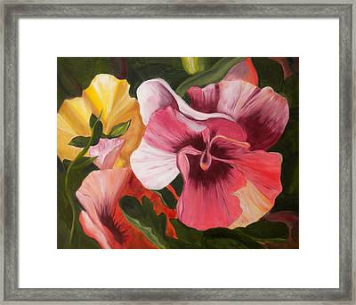 Pansies Framed Print by Yvonne Knight