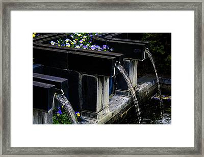 Pansy Fountain Framed Print