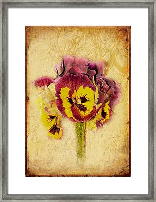 Pansy Framed Print by Margaret Hormann Bfa