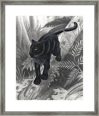 Panther By The Water Framed Print