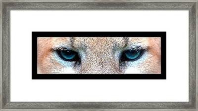 Panther Eyes Framed Print by Sumit Mehndiratta