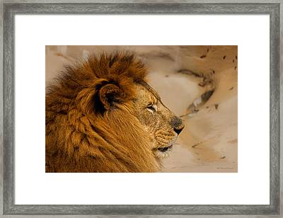 Papa Can You Hear Me Framed Print by Robin Konarz