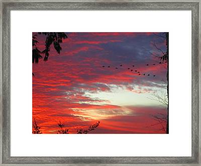 Papaya Colored Sunset With Geese Framed Print by Kym Backland