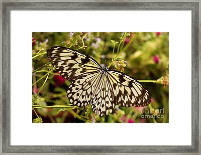 Framed Print featuring the photograph Paper Kite Butterfly by Eva Kaufman
