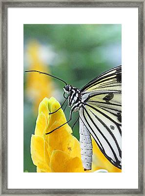 Paper Kite On Yellow Flower Framed Print by Becky Lodes