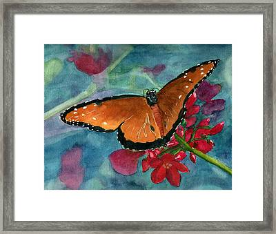 Papilio Fandango  Framed Print