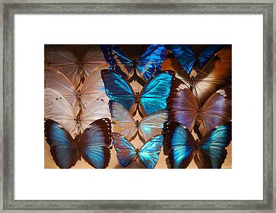 Papillon Framed Print by Tim Nichols
