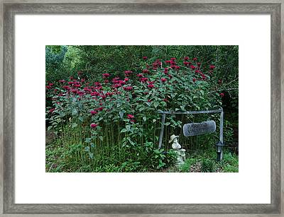 Pappy's Valley Framed Print by Katheryn Napier