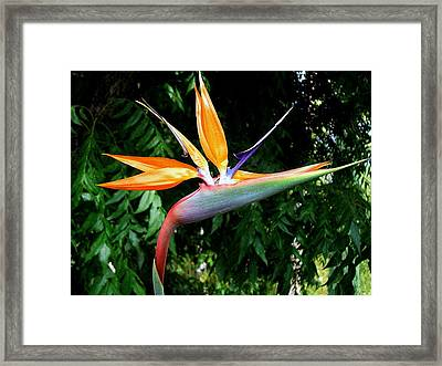 Framed Print featuring the photograph Paradise by Kathy Bassett