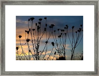 Paradise Framed Print by Snow White