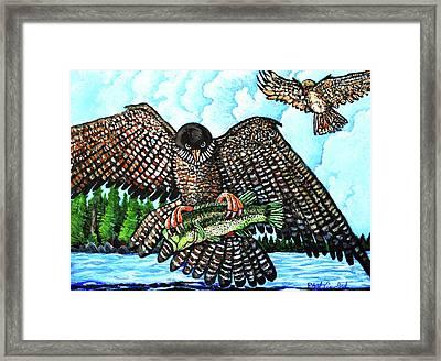 Paragon Falcon Framed Print by Bob Crawford